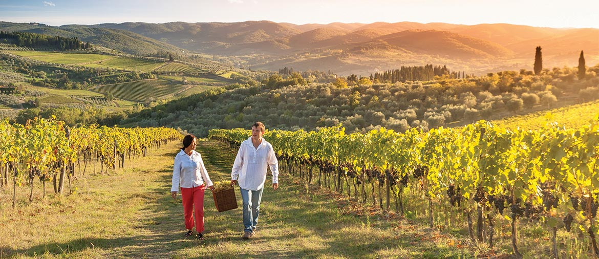 Explore napa valley for Best time to visit napa valley wine country