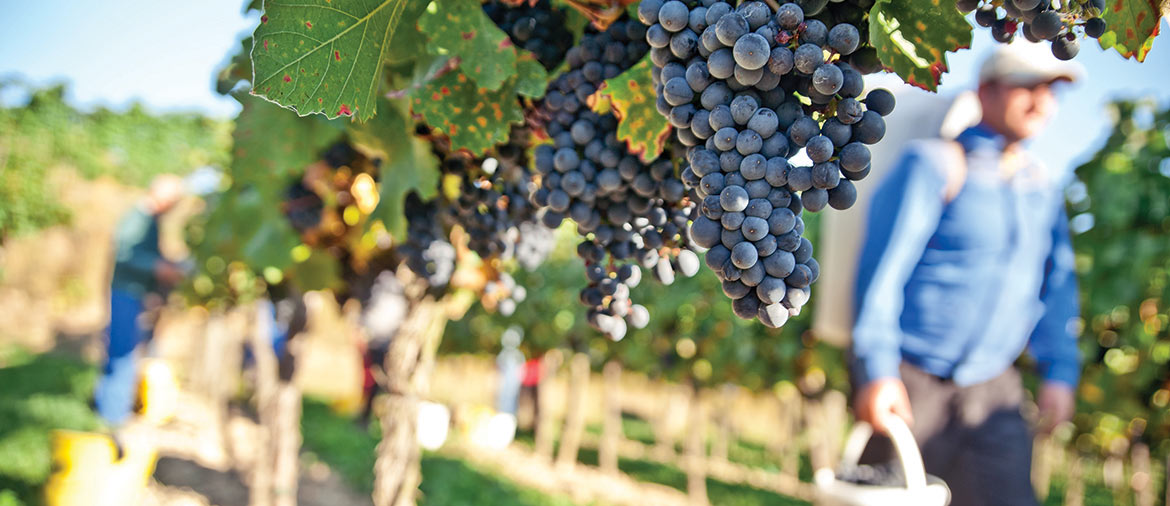 The 10 Must See Wineries In Yountville For Newcomers