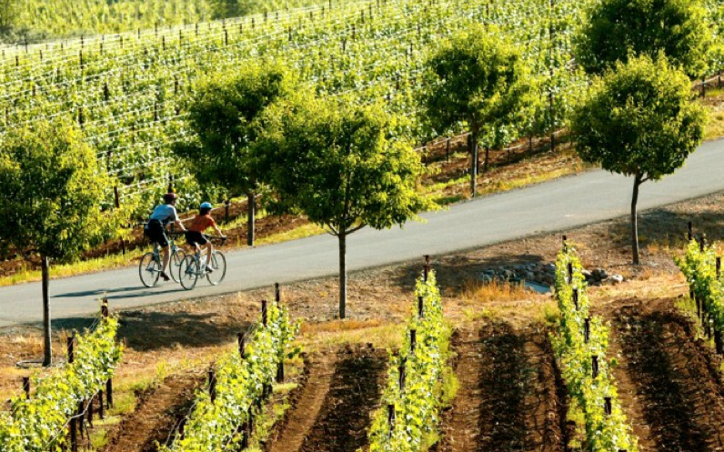 Trek-Travel-Napa-valley-bike-tour