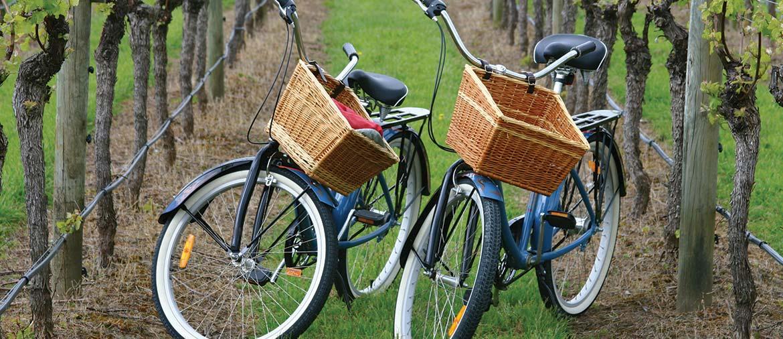 Sonoma Valley Wine Tours Bike