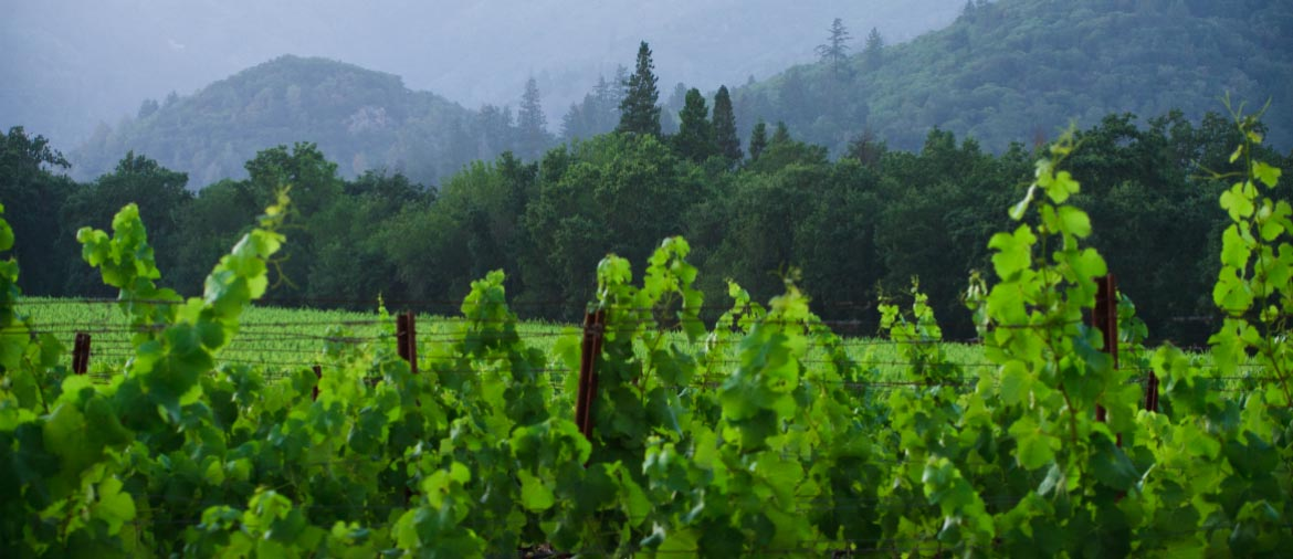 howell-mountain-wineries-1170x506