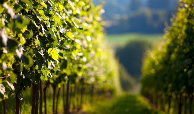 basic-wine-facts-region