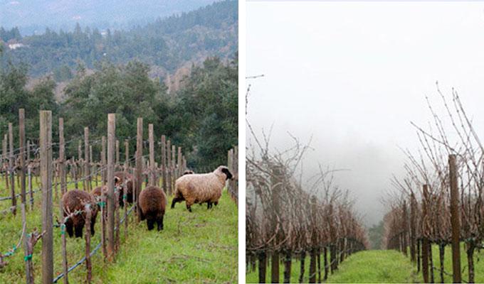 grace-family-vineyards-wine
