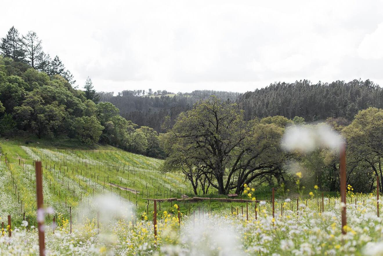Mayacamas Vineyard, Napa Valley, vineyards & meadow