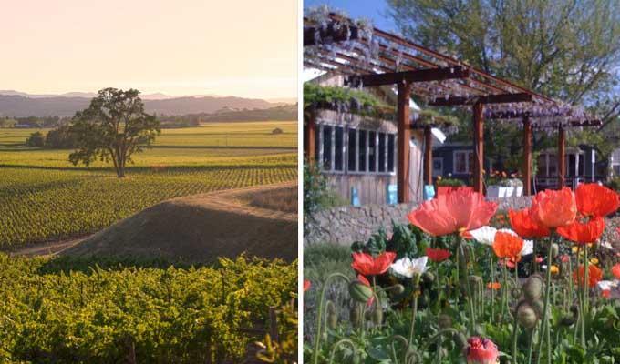hawkes-vineyard