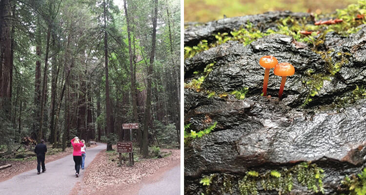 armstrong-redwoods-state-natural-reserve-750