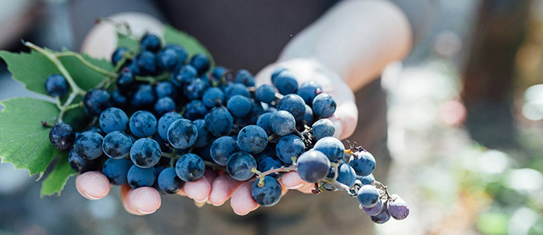 kenwood-wineries1170