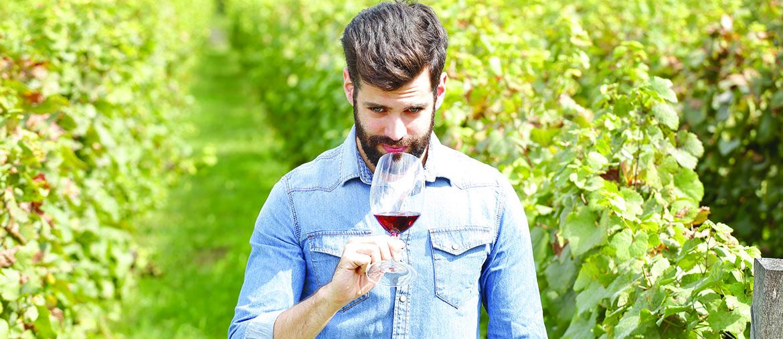 Best Wineries in Santa Rosa 1170