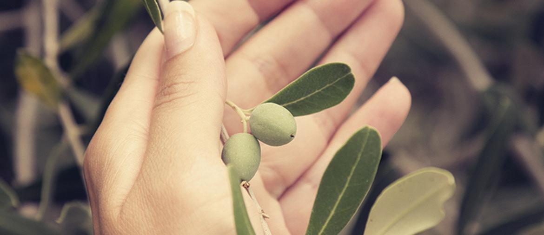 sonoma-olive-oil-1170