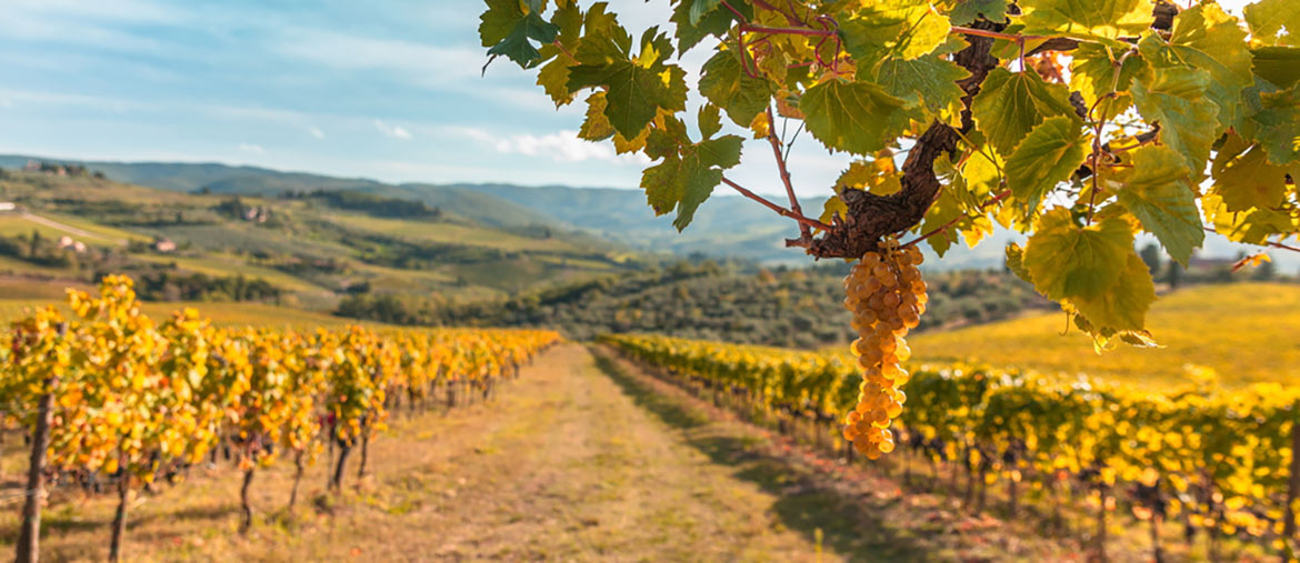 vineyards-at-sunset-glen-ellen-wineries-guide
