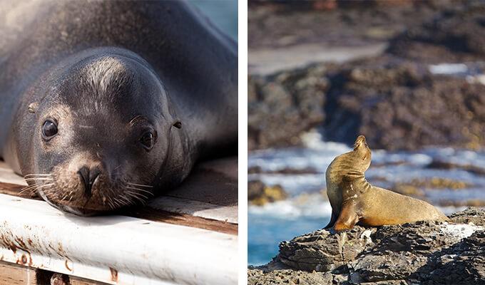 sea-lion-watching