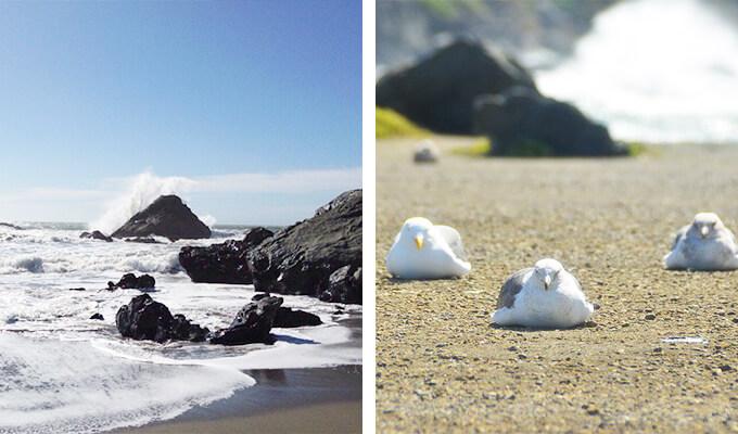 goat-rock-beach