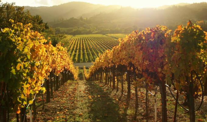 Sonoma Wine Road (1)
