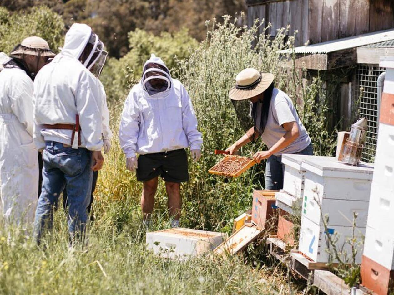 Beekeeping at Heidrun Meadery