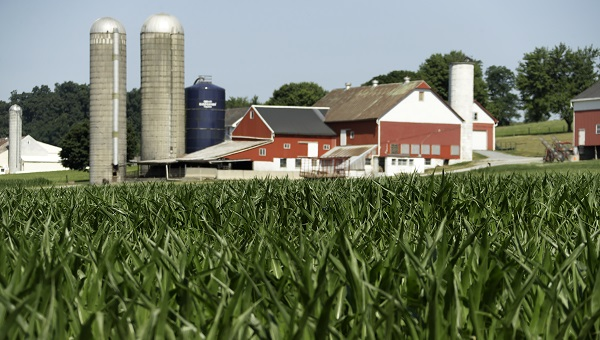 Farm in Lancaster.jpg