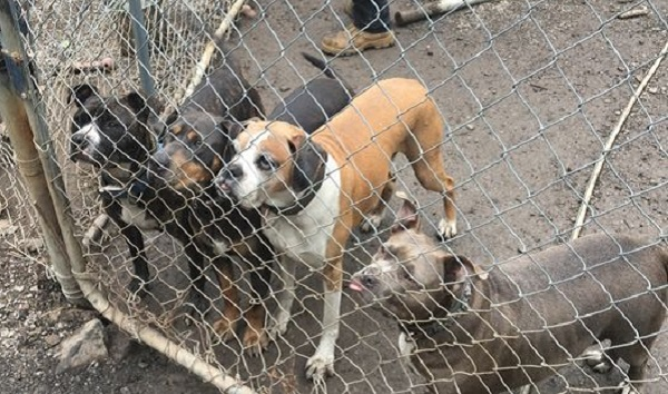 Problems continued at midstate pet rescue despite warnings