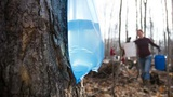 Sugaring - Climate Wisconsin