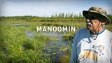Manoomin: Food That Grows On The Water  - The Ways