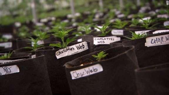 Charlotte's Web , puregreenpdx.com