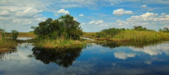 The Everglades. Photo courtesy the National Parks Conservation Association.