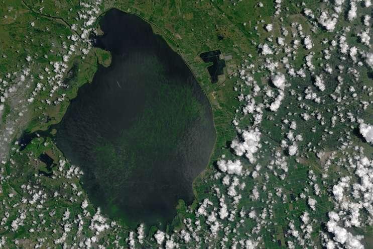 Satellite photograph of Lake Okeechobee from July 2016, showing a large cyanobacteria algae bloom. Image courtesy of NASA