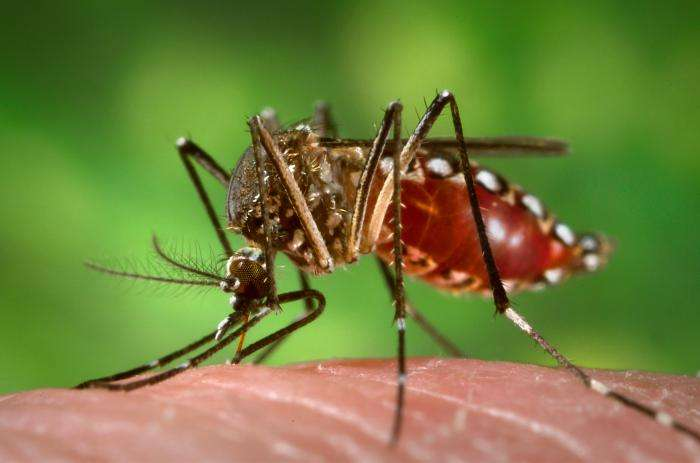 The aedes aegypti mosquito is known to spread Zika virus, and is found in Florida.