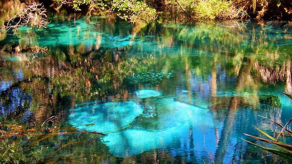 Making its World Premiere at the Global Peace Film Festival, 'Hidden Secrets of Florida Springs' explores the mysteries of Florida's freshwater springs.