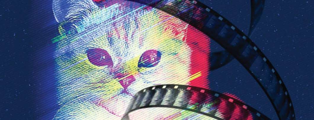 Image: Cat Video Fest 2019, enzian.org