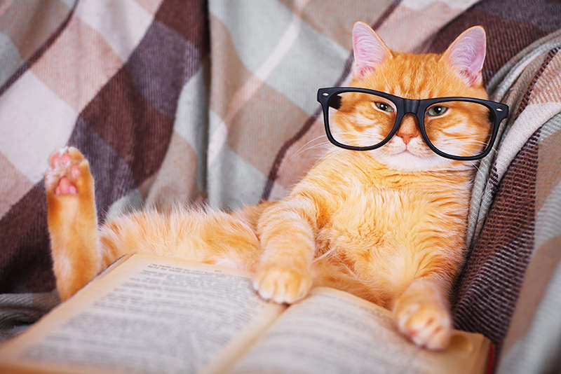 This is a cute orange cat in glasses lying on a sofa with a book. You're welcome.