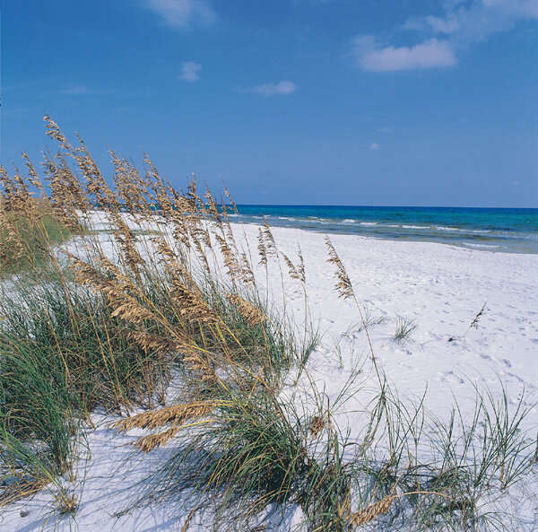 """Stephen """"Dr. Beach"""" Leatherman named Grayton Beach State Park as the number one beach in the country."""