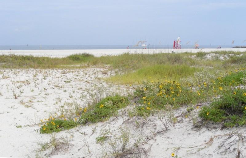 WMNF News: Beach dunes