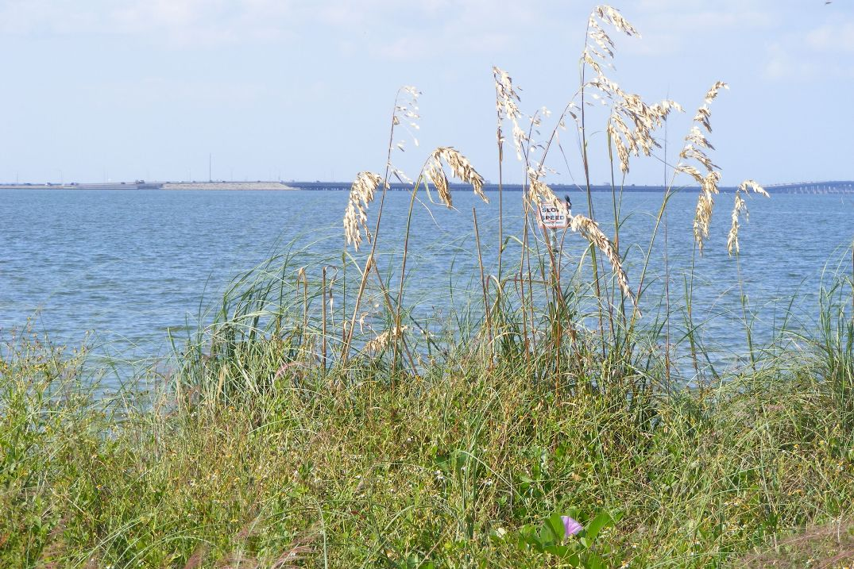 Sea oats WMNF News