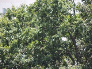 Roosting habitat for birds