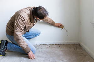 Mold Inspections: What You Need to Know Before Buying a Home