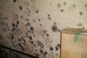 Our Mold Damage Cleanup Services are Done with Painstaking Care