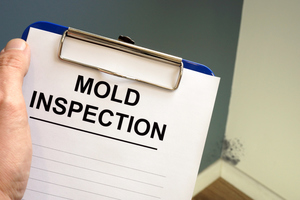 Do I Really Need a Mold Inspection?
