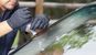 What to Look for in an Auto Glass Repair Company