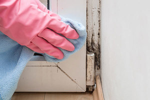 Mold Damage Removal You Can Count On