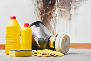 Get a Mold-Free Home with Mold Restoration