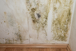 Mold Damage, Knoxville, TN