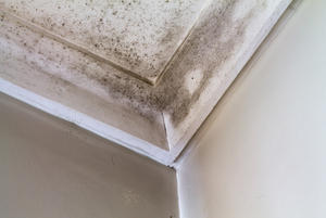 Mold Cleanup, Knoxville, TN