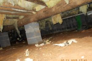 Crawlspace Mold, Fredericksburg, VA