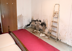 Make Your Home Safe Again with Mold Remediation