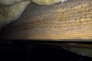 Mold in Crawl Space, Chapin, SC