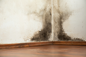 Mold Inspection: The First Step to Breathing Clean, Healthy Air