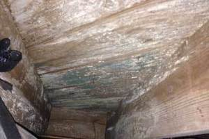 Crawl Space Mold Removal, Columbia, SC