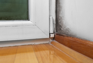 Let Us Solve Your Basement Mold Problem