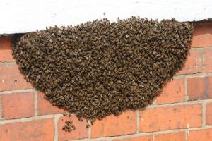 Bee Removal, Sarasota, FL