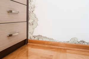How to Prevent House Mold