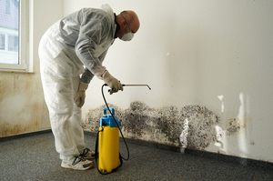 What to Do When You Need Mold Damage Removal